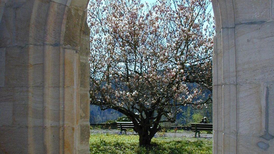 Klostergarten im Kloster Lorch