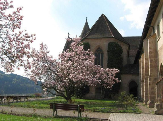 Lorch monastery, magnolia trees in front of the monastery church