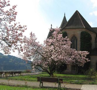Magnolias in front of the cloister in Lorch Monastery. Image: The organization team of Lorch Monastery; Johannes Schmiedt